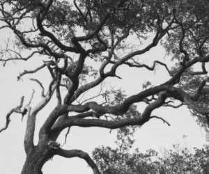 black and white and tree image