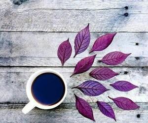 coffee, leaves, and purple image