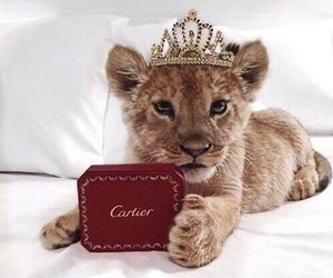 animal, lion, and cartier image