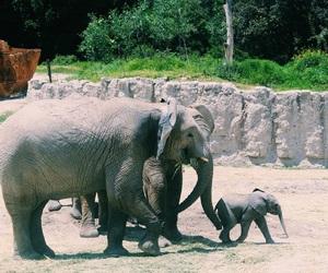 Animales, animals, and elefantes image