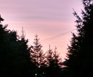 dusk, pink, and forest image