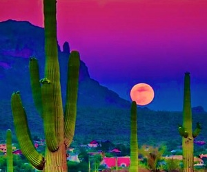 bright, cactus, and colorful image