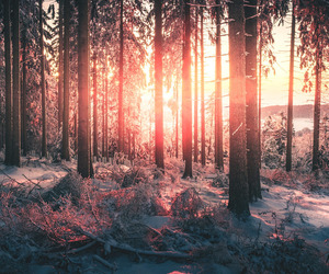forest, snow, and germany image