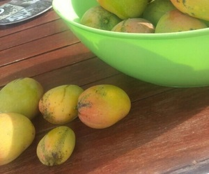 FRUiTS, holidays, and mango image