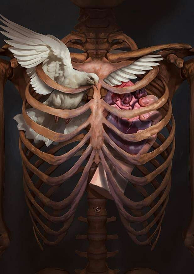 art, heart, and bird image