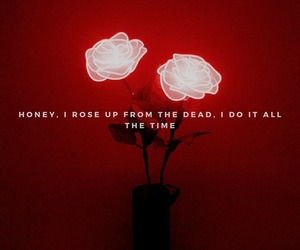flowers, Lyrics, and red image