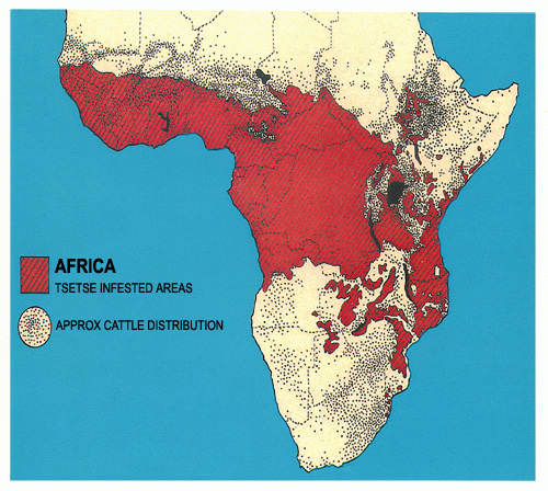 africa, fly, and map image