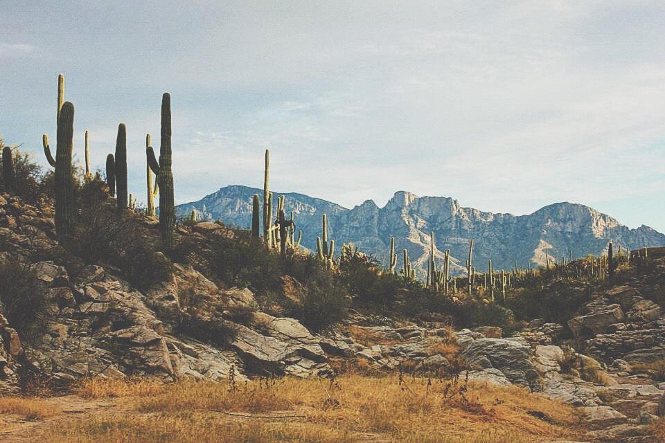 cactus, desert, and mountain image