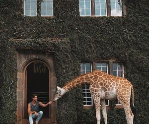 giraffe, Kenya, and travel image