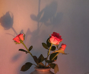 home, rose, and upload image