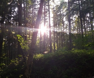 forest, france, and nature image