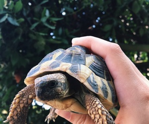 summer, tortue, and nature image