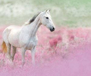 horse, nature, and pink image