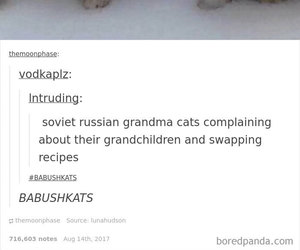 cat, meme, and post image