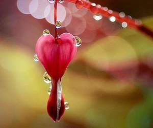 dewdrops, flowers, and heart image