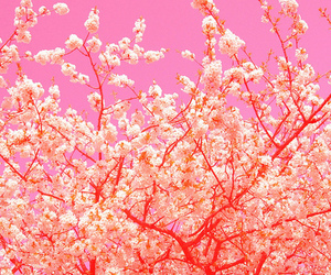 pink and psychedelic image