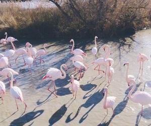 animals, birds, and flamingo image