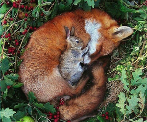fox, animal, and rabbit image