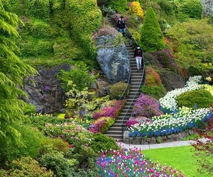 flowers, view, and garden image
