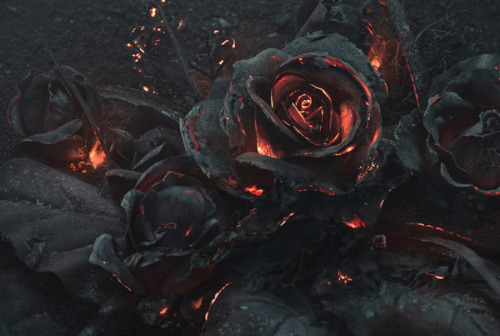 rose, black, and fire image