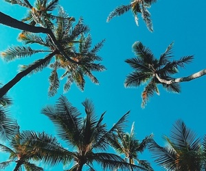 blue, summer, and palm trees image