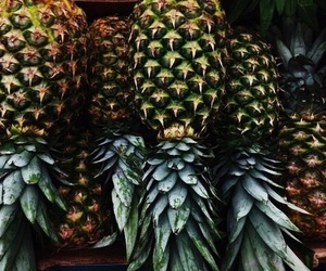 nature, dirty tropical, and theme image