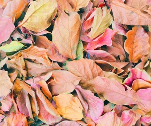 aesthetic, autumn, and background image