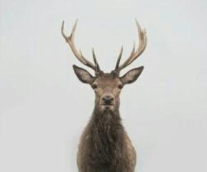 deer, aesthetic, and animal image
