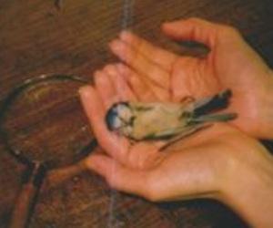 bird, dark, and dead image