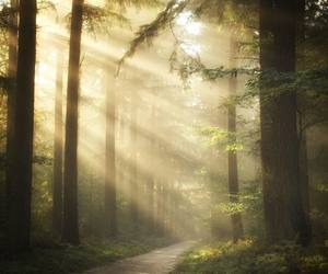 forest, light, and nature image