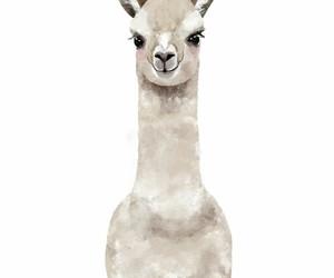 little, cute, and llama image