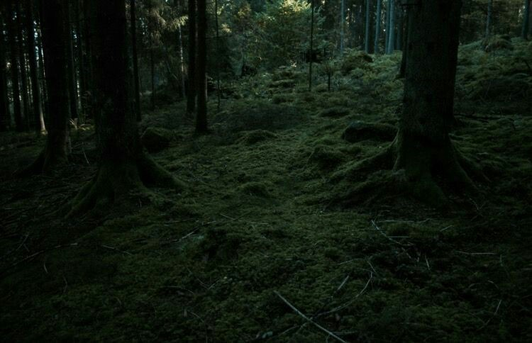 aesthetic, forest, and harry potter image