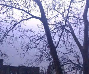 lightning, rain, and relampago image