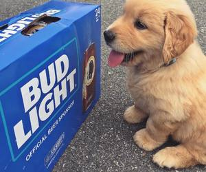 aesthetic, drink, and animals image