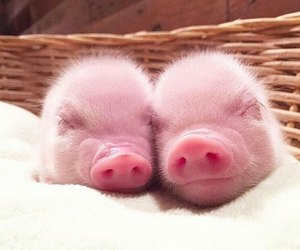 animal, cute, and pink image