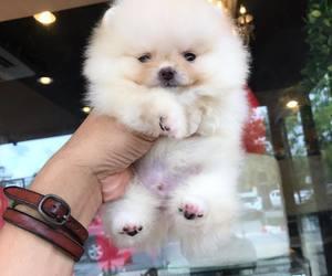 baby, dog, and doggy image