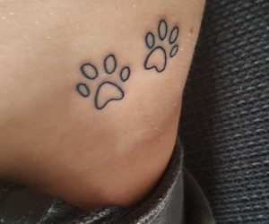 dog, dogpaw, and dogs image