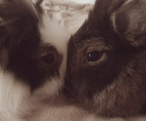 animal, bunny, and cuddle image