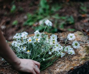 chamomile, flower, and summer image