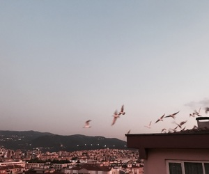 bird, city, and fly image