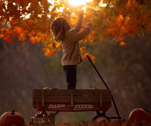 photography, fall, and landscape image