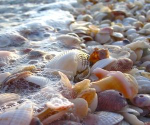 beach, shell, and sea image