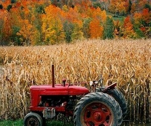 autumn, tractor, and farm image