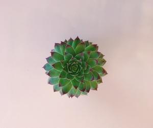 succulent and takenbysara image