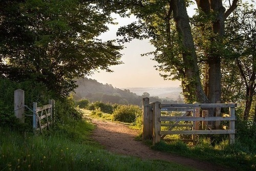 nature, gate, and photography image