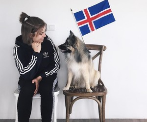dog, iceland, and puppy image