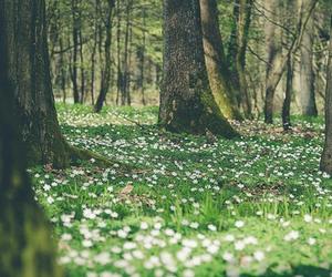 arbres, Fleurs, and forêt image