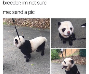 funny, animals, and dog image