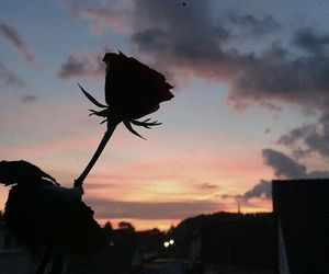 rose, sky, and sunset image