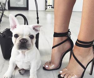 dog, fashion, and shoes image